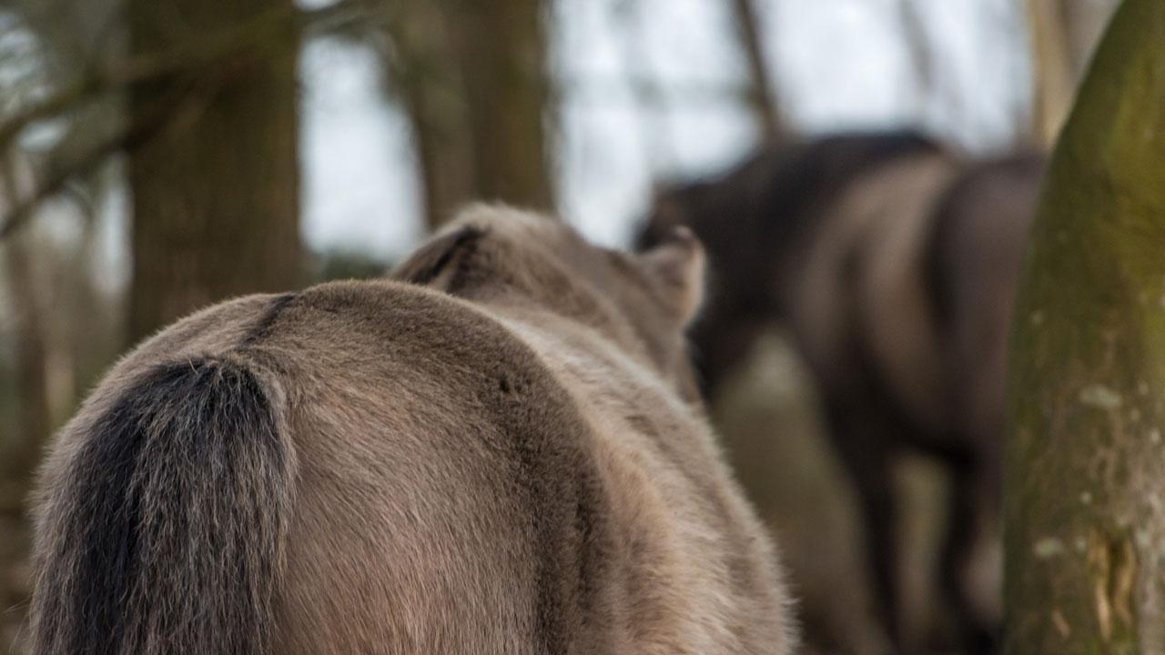 Befindet man sich mitten in einer Herde, kann man sich einfach treiben lassen.