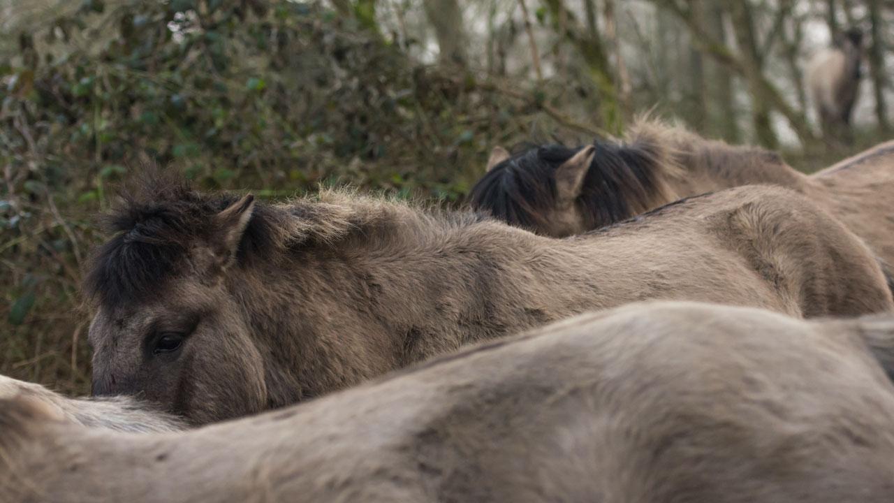 Auch, wenn man sich unterordnet, ist man in einer Pferdeherde sicher.